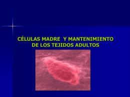 xxiv. células madre