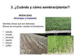 3. ¿Cuándo y cómo sembrar/plantar? Plantaciones