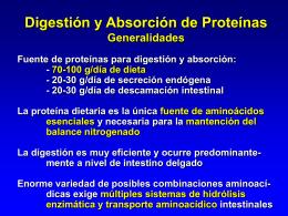 Abosrción de proteínas