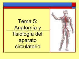 Tema 5: Anatomía y fisiología del aparato circulatorio