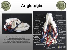 Angiología - anatomiayplastinacion