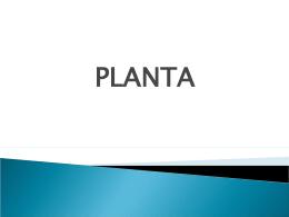 Planta Liquidada