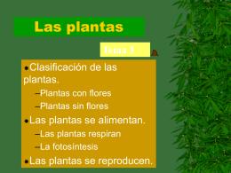 Las plantas - Todo Primaria
