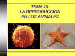 TEMA 16: LA REPRODUCCIÓN EN LOS ANIMALES