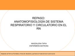 anatomofisiologia del sistema circulatorio y respiratorio