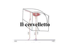 8 Cervelletto - Università degli studi di Pavia