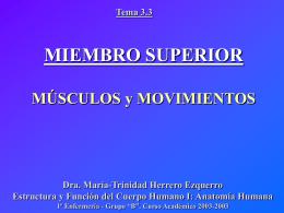 Miembro superior. Músculos y movimientos