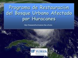 Selección de especies tropicales resistentes al viento
