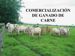 COMERCIALIZACIÓN DE GANADO DE CARNE