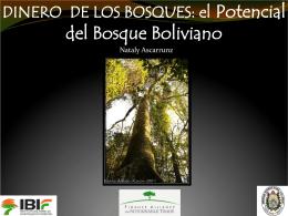 El potencial del bosque boliviano