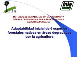Adaptabilidad inicial de seis especies forestales nativas en áreas