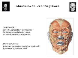 Músculos del cráneo y Cara