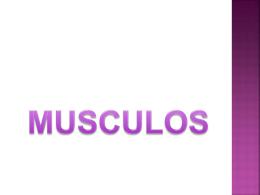 Musculos del miembro inferior - diana-ruiz