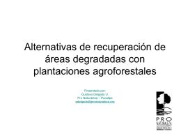 Proyecto Modelo de Manejo Agroforestal con Bolaina en la cuenca