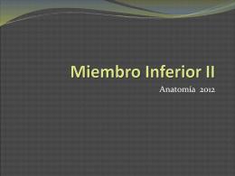 Miembro Inferior II