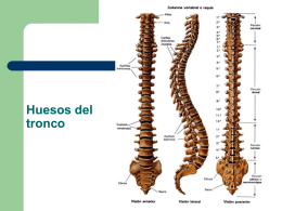 Huesos miembro superior - IES Quartó de Portmany