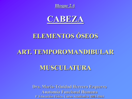Cabeza. Elementos óseos, art. temporomandibular, musculatura