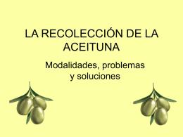 La recolección de la aceituna