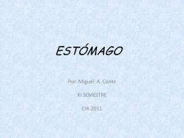 ESTÓMAGO - Telmeds.org