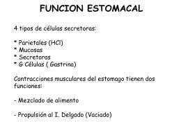 Anatomia del estomago 4 tipos de celulas secretoras: Parietales