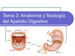 Tema 3: Anatomía y fisiología del Aparato Digestivo