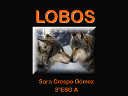 LOBOS - Intracentre