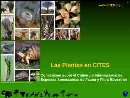 Las plantas en CITES