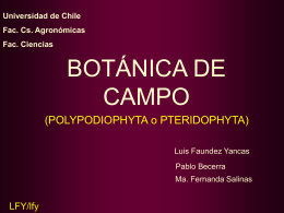 polypodiophyta - Universidad de Chile