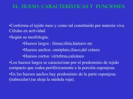 El hueso:Características y funciones