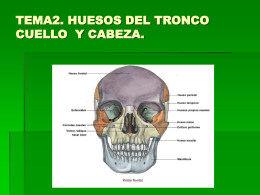 TEMA2. HUESOS DEL TRONCO