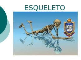 Anexo_musculo_esqueletico1