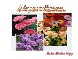 La flor y sus modificaciones.