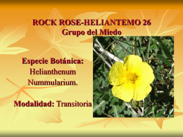 ROCK ROSE-HELIANTEMO 26
