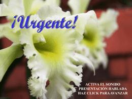 URGENTE - Jesús Salva mi familia