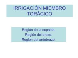 IRRIGACIÓN MIEMBRO ANTERIOR