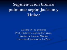 Segmentación bronco pulmonar según Jackson y Huber