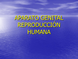APARATO GENITAL modificado