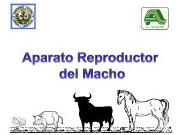 Anatomia Aparato Reproductor Masculino