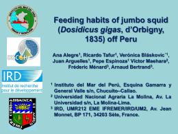 (Dosidicus gigas, d`Orbigny, 1835) off Peru