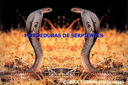 mordedura de serpiente 2012