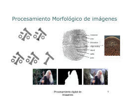 Morfologia v003