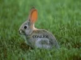 conejo - labclinveterinario