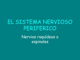 EL SISTEMA NERVIOSO PERIFERICO