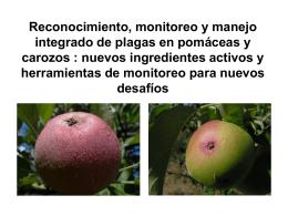 Polilla de la Manzana (Cydia pomonella)