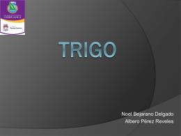 TRIGO - FCQ