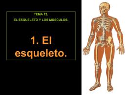 1. El esqueleto