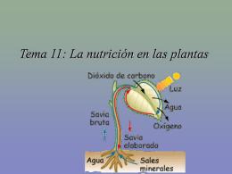Tema 11: La nutrición en las plantas