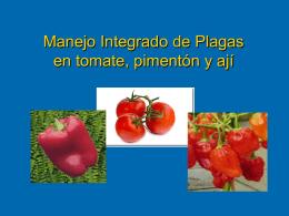 MIP en tomate, ají y pimentón