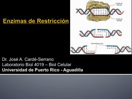 Lab5_Enzimas Restriccion_UPRAg