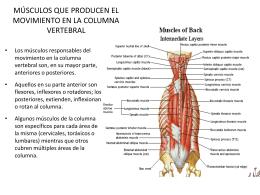 músculos que producen el movimiento en la columna vertebral